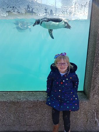 Welsh Mountain Zoo: 20180325_113005_large.jpg