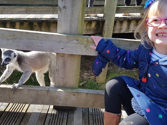 Welsh Mountain Zoo: 20180325_114217_large.jpg