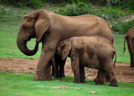 cute baby elephants picture of alan tours port elizabeth