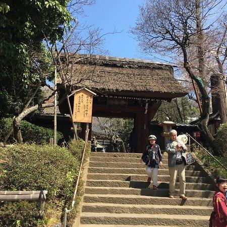Jindai-ji Temple: photo2.jpg