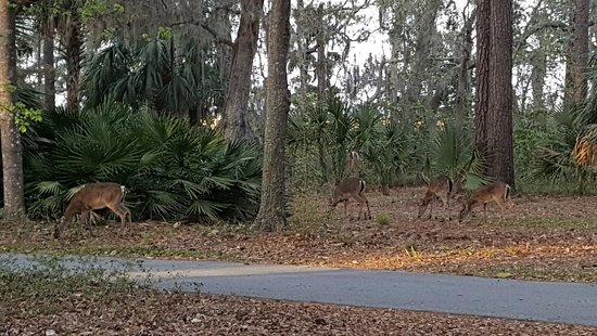 Fort McAllister State Historic Park Campground: watching the deer from our tent site
