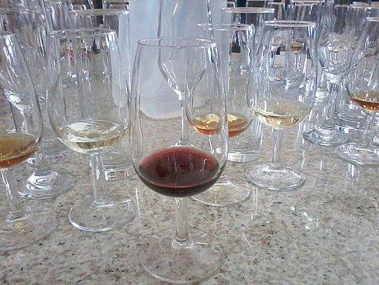 Casa Nova, BA: Degustação de vinhos na vinícola Ouro Verde.