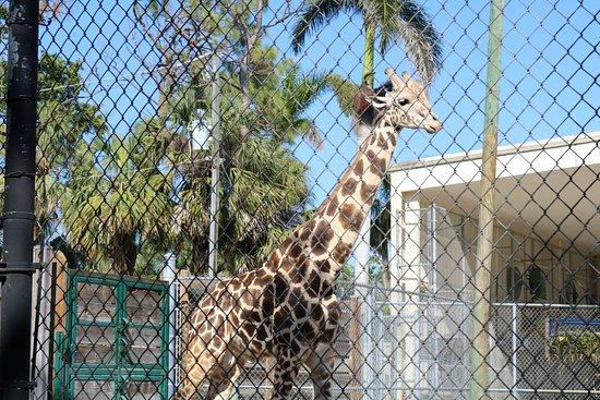 Naples Zoo at Caribbean Gardens: 20180325164810_IMG_0923_large.jpg