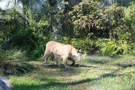 Naples Zoo at Caribbean Gardens: 20180325162919_IMG_0915_large.jpg
