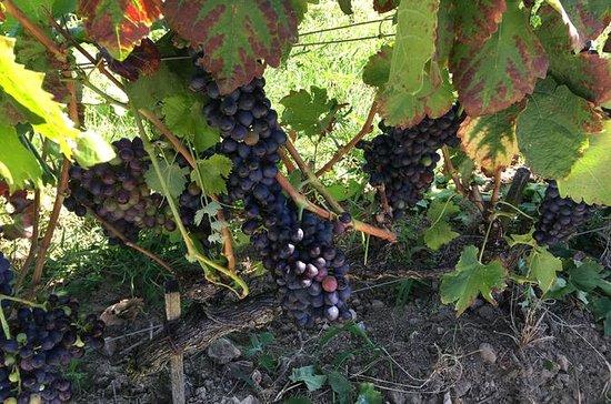 Oster og vin i Rhône-dalen