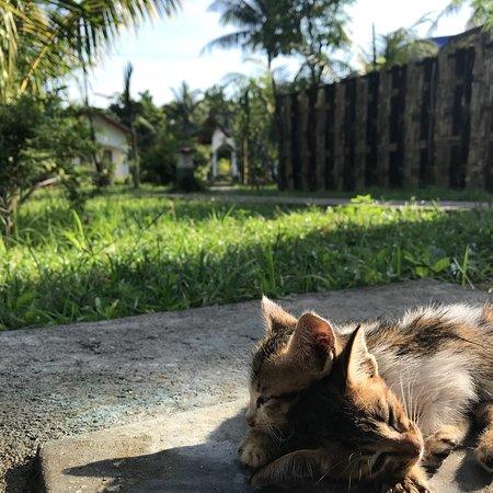 Sambelia, Indonesia: Bidara Cottage