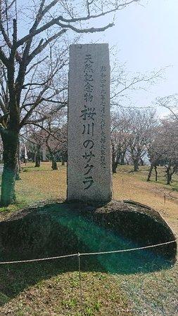 Isobe Sakuragawa Park