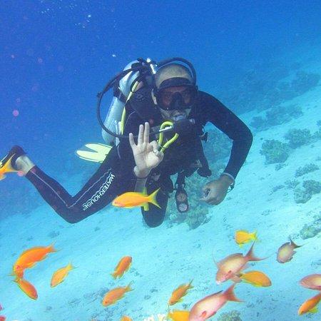 Scubadoo Divers