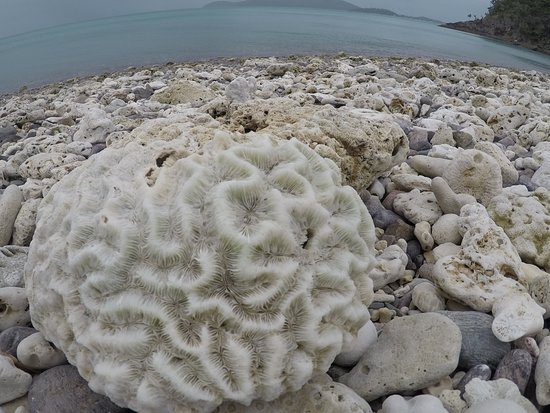 Shute Harbour, Australia: coral skeleton on the beach