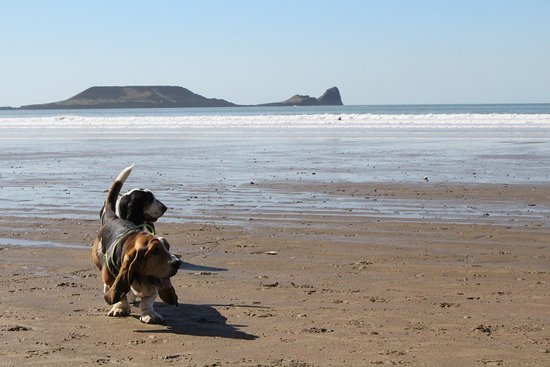 Worms Head From The Beach At Rhossili Picture Of Worm S Head
