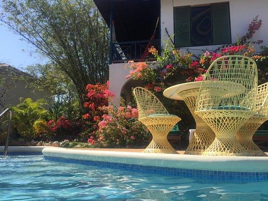 Catcha Falling Star Gardens Photo