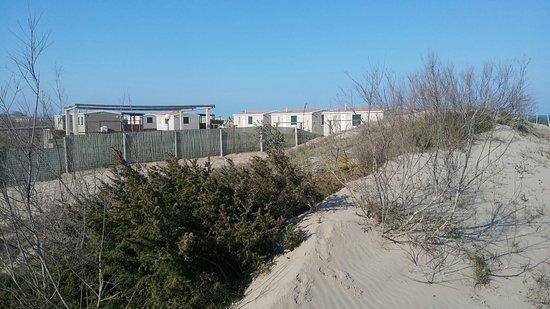 Rosolina, Italien: Area della pineta in prossimità della spiaggia