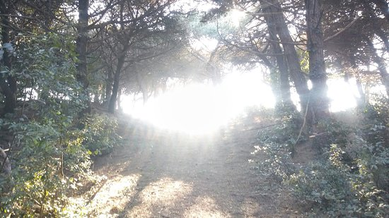 La Pineta: Pineta di Rosolina