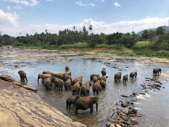 Hotel Elephant Park : wunderschöner Anblick !