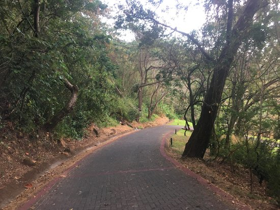 Hotel Borinquen Mountain Resort: The walk down from our junior suite, instead of caling for a pickup.