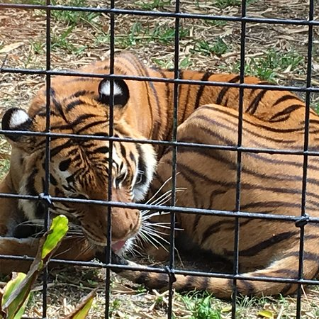 Naples Zoo at Caribbean Gardens: photo0.jpg