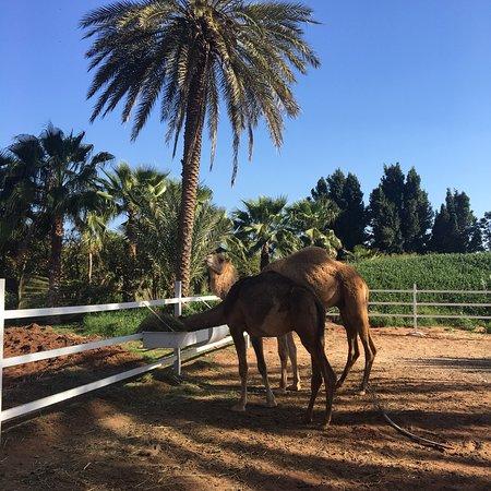 Oulad Teima, Marokko: photo2.jpg
