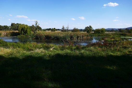 Jerrabomberra Wetland