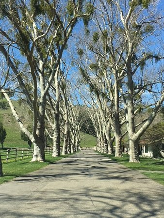 Alisal Guest Ranch & Resort: Departing shot