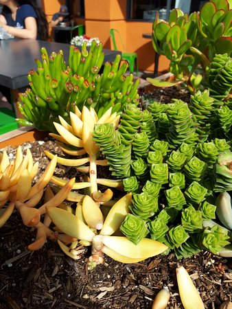 World Wrapps: beautiful succulents by outside seating area