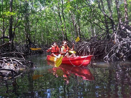 Xtreme Langkawi Mangrove Kayaking