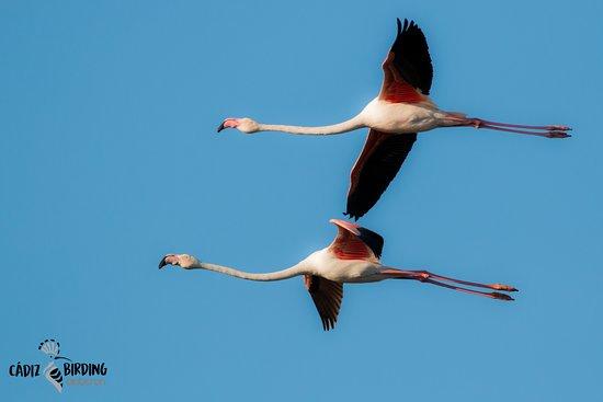 Cadiz Birding