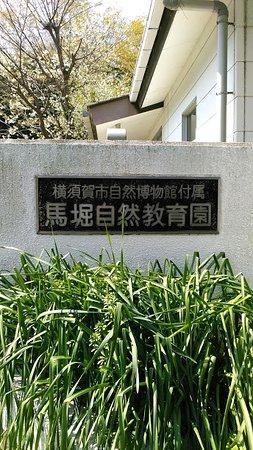 Yokosuka Mabori Nature Study