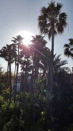 Les Jardins de la Medina: 20180320_082118_large.jpg