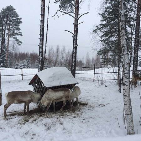 Nilsia, Finland: photo3.jpg