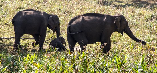 Periyar National Park: Elephants including a very young calf