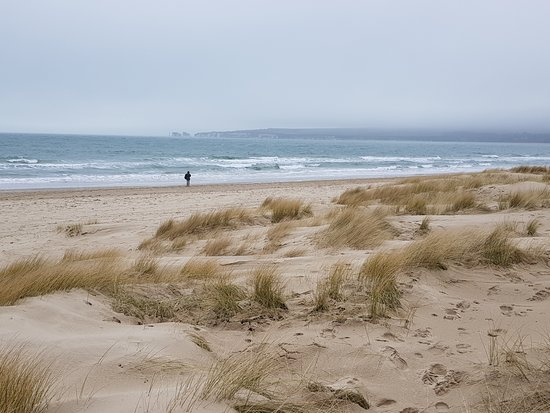 Studland Bay in March - Picture of Studland beach and Nature