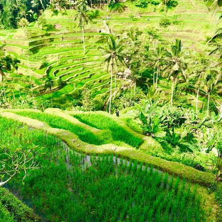 Tegalalang Rice Terrace: photo0.jpg