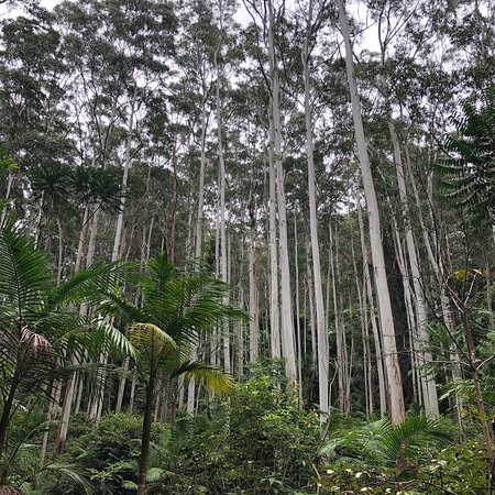 Woolgoolga, Αυστραλία: photo1.jpg