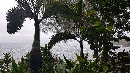 Hawaii Tropical Botanical Garden: 20180314_115436_large.jpg