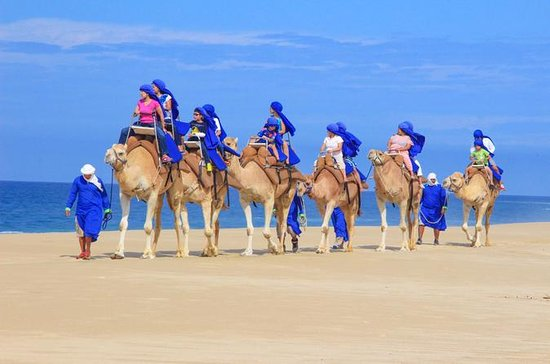 Baja Ranch Tour and Camel Safari from