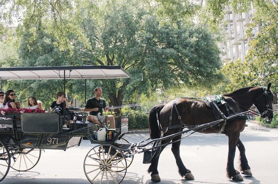 Visite historique des chevaux et des...