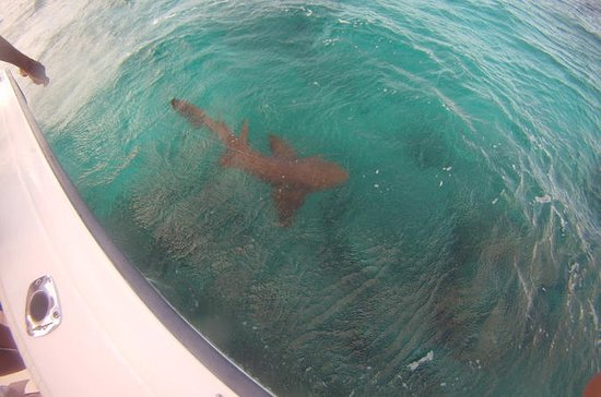 Private Shark Fishing Adventure from...