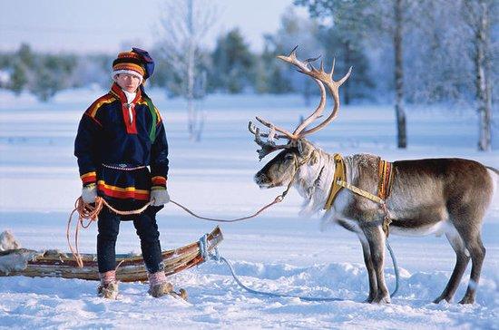 Visita una fattoria di renne con un