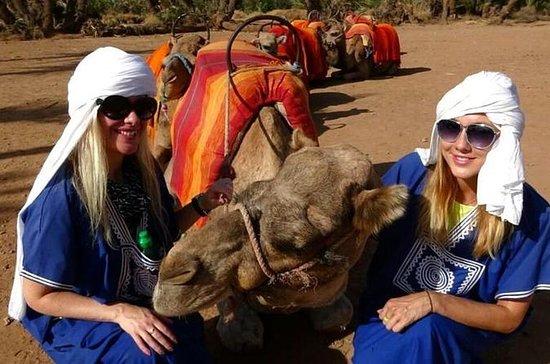 Marrakech Palm Grove Camel Ride med...