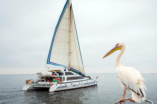 Daily Sail from the Walvis Bay...