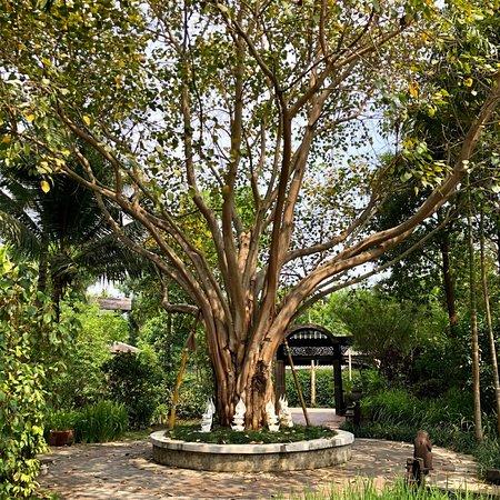 Saraphi, Thailand: photo6.jpg