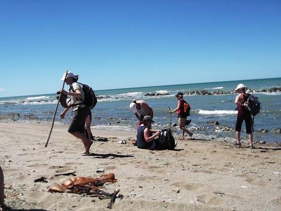 Whareama, نيوزيلندا: Whareama Coastal Walk - Beach Scene