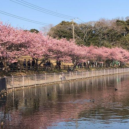 Komatsugaike Park