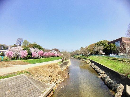 Kiyose Seseragi Park