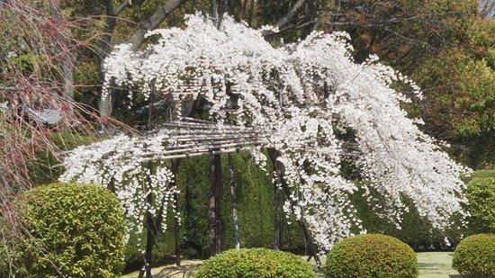 Senjin Monument