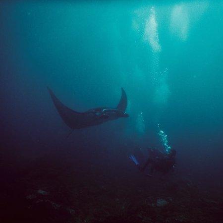 Two Fish Divers Lembongan : photo0.jpg