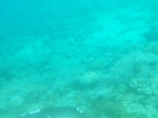 Fun & Sun Dive & Travel: 20180328_163630_large.jpg