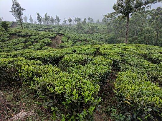 Haripur, India: IMG_20180323_172507_large.jpg