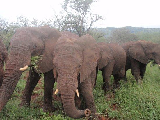 Bilde fra Amakhosi Safari Lodge