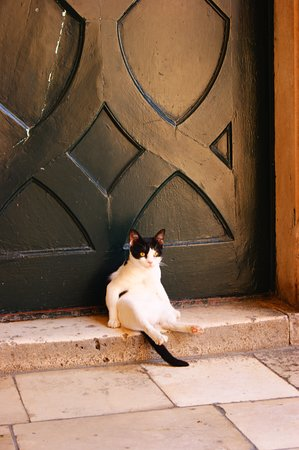 Arbanija, Croatia: cat